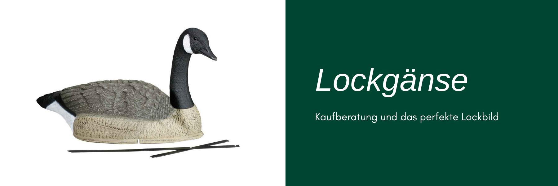 Lockgänse - Kaufberatung und das perfekte Lockbild