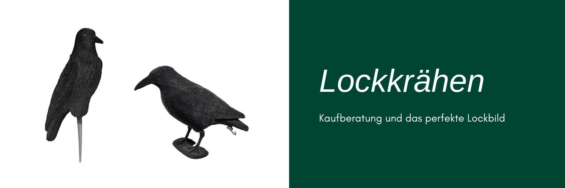Lockkrähen - Kaufberatung und das perfekte Lockbild