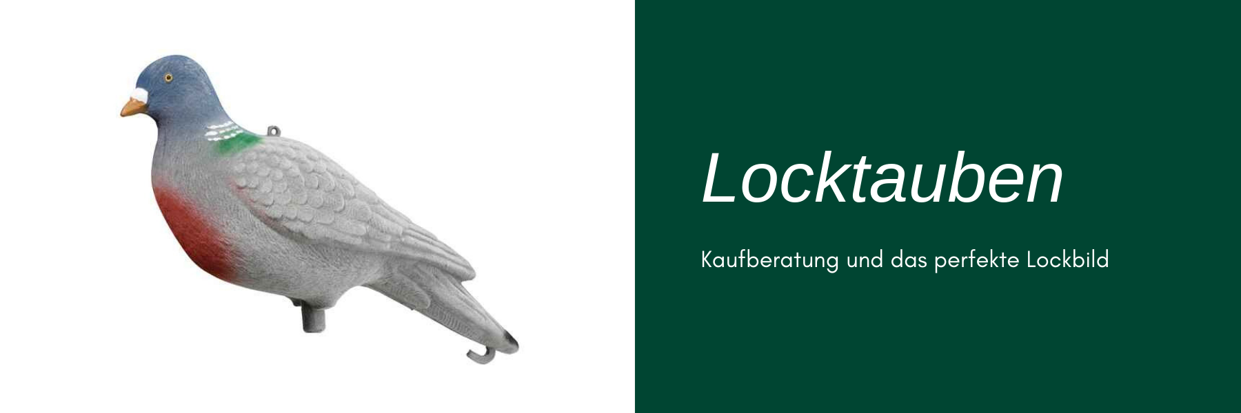 Locktauben - Kaufberatung und das perfekte Lockbild