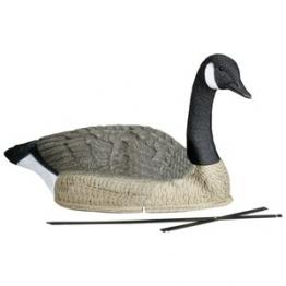 Lockvogel Kanadagans
