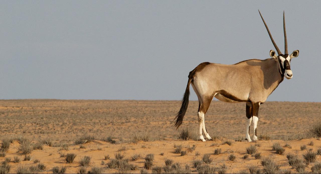 Jagdreisen Afrika