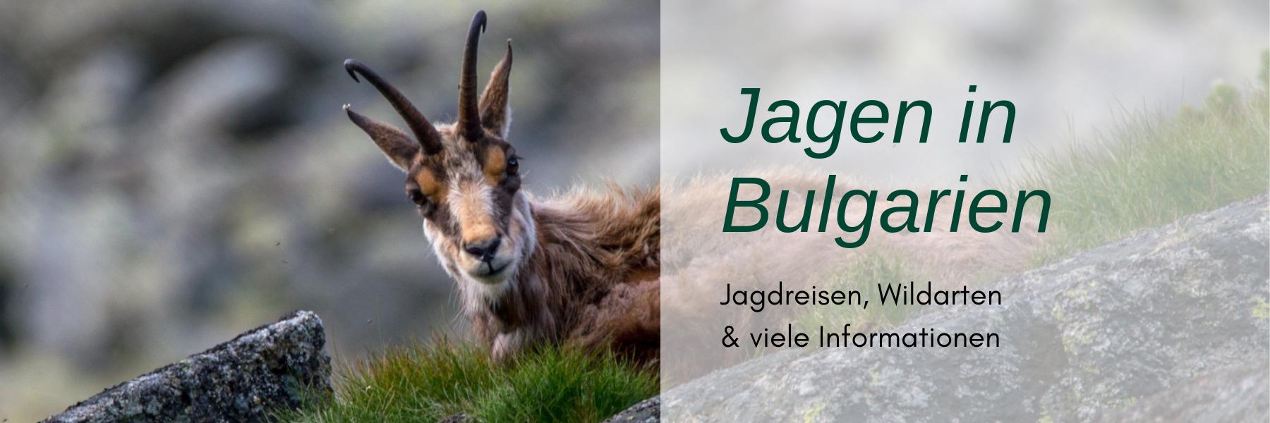 Jagdreise Bulgarien
