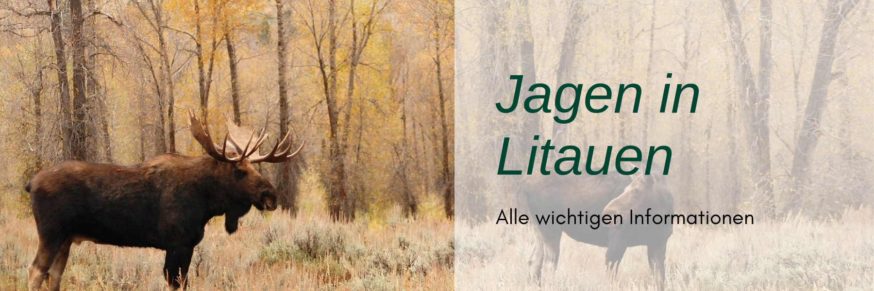 Jagdreise Litauen
