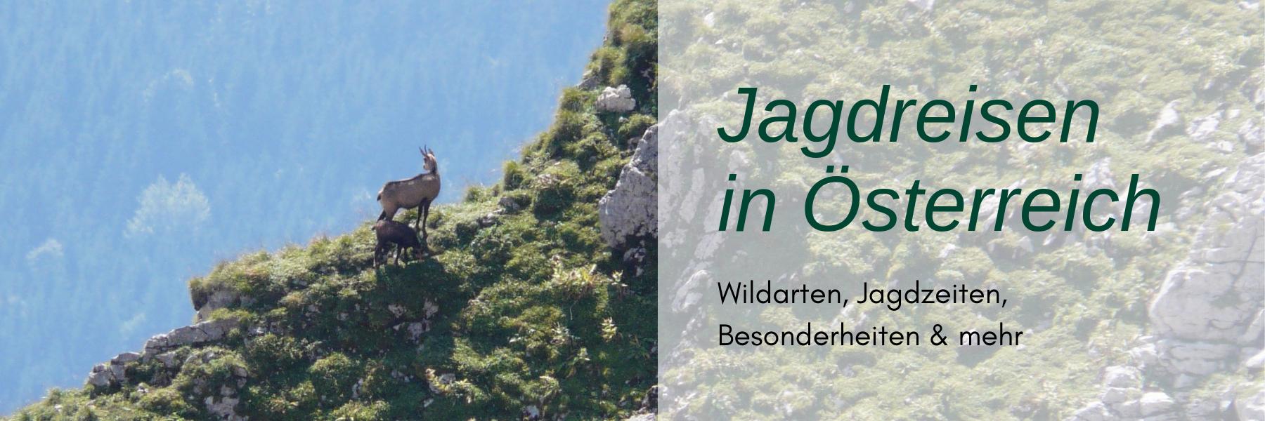 Jagdreise Österreich