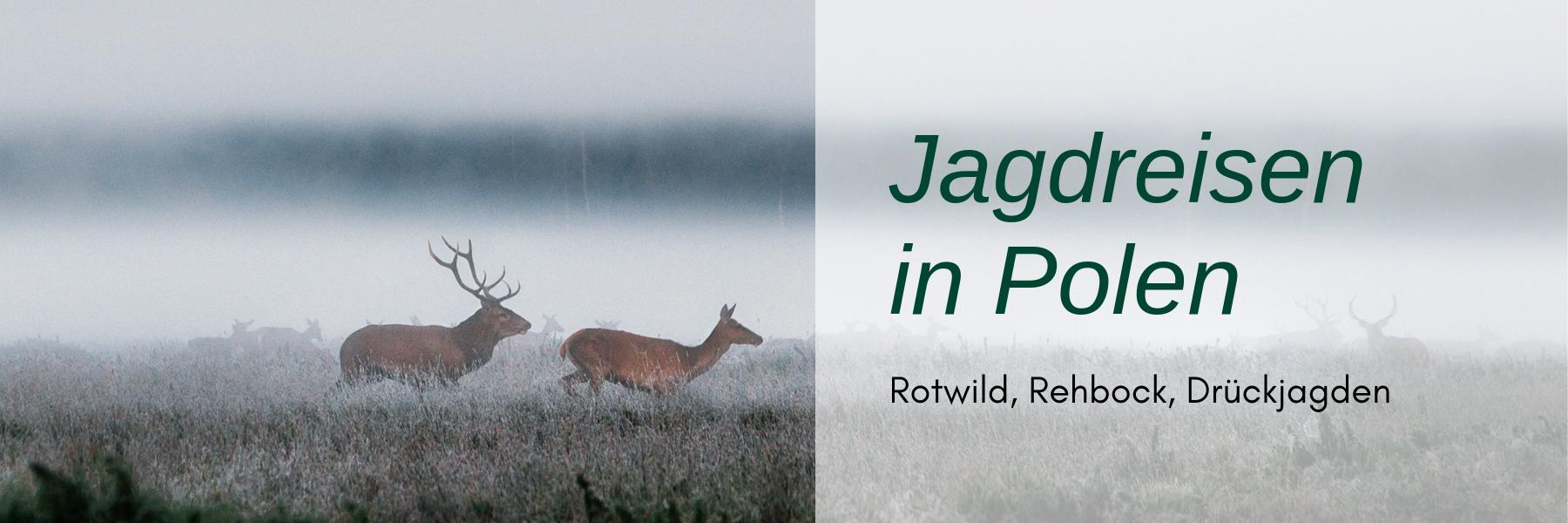 Jagdreisen Polen: Eine spannende Alternative zu deutschen Wäldern