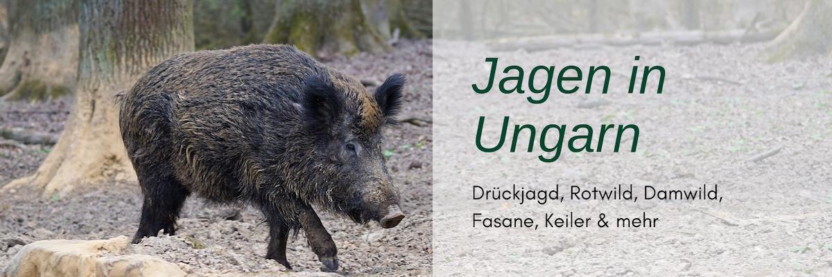 Jagdreisen Ungarn