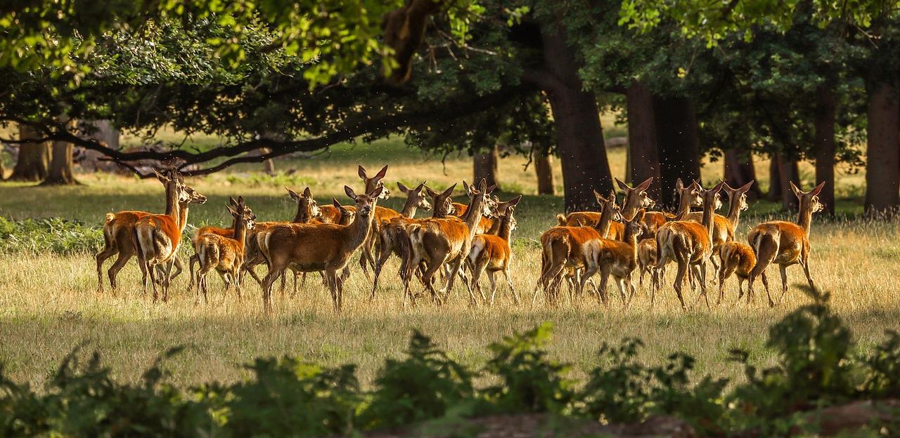 Wann ist die beste Jahreszeit für eine Jagdreise nach England?