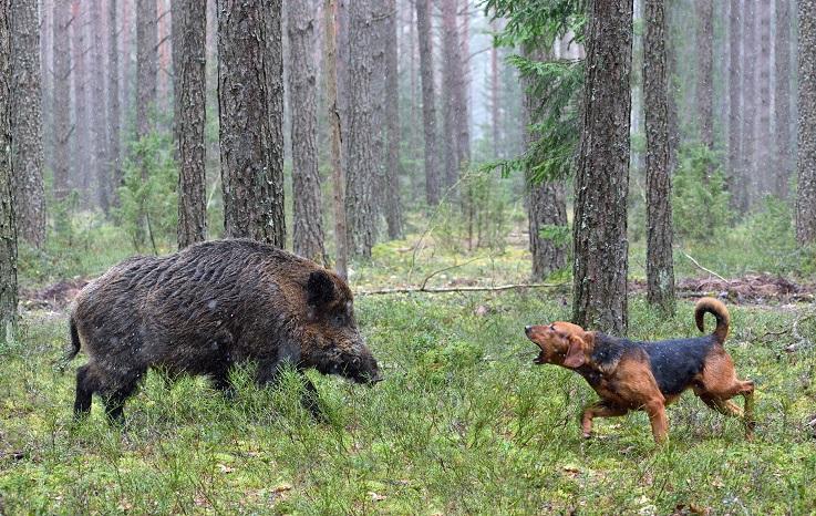 Jagdhaftpflichtversicherung Vergleich 2020 - auch Hunde müssen versichert sein